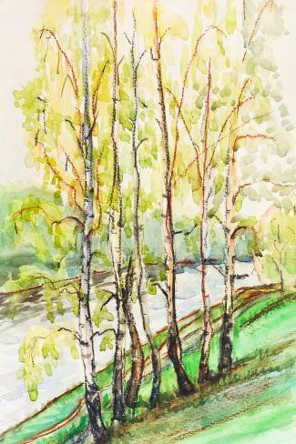 Birches near River Stampa artistica