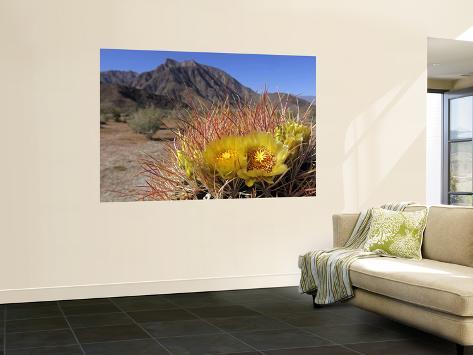 Blooming Barrel Cactus at Anza-Borrego Desert State Park, California, USA Giant Art Print