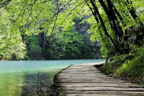 Wooden Path Near A Forest Lake Lámina