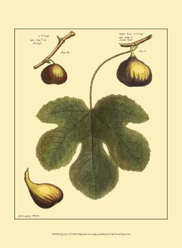 Fig Leaf I Art Print