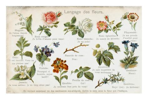 Language of Flowers Card Stampa giclée