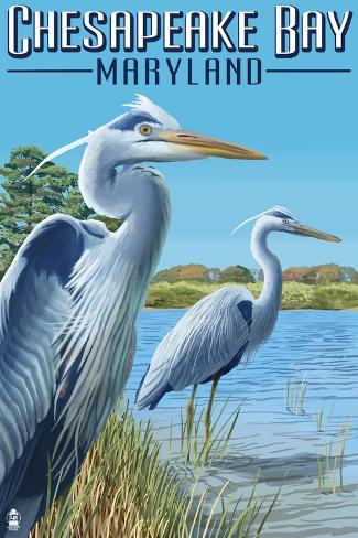 Chesapeake Bay, Maryland - Blue Heron Art Print