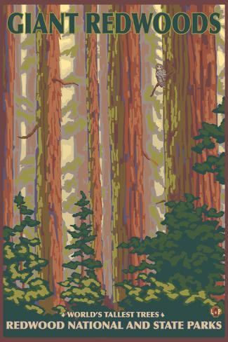 Giant Redwoods, Redwood National Park, California Art Print