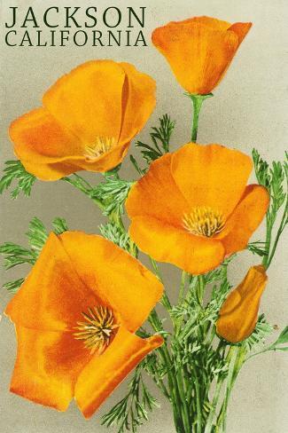 Jackson, California - The Californian Poppy Flowers Art Print