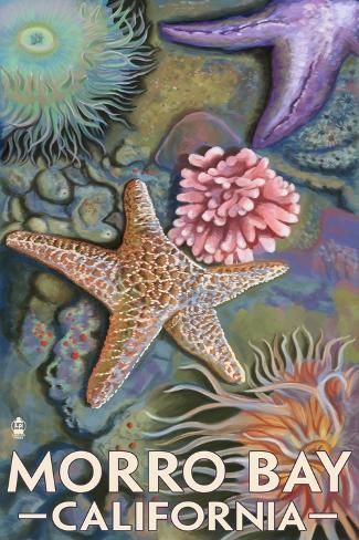 Morro Bay, CA - Tidepool Art Print