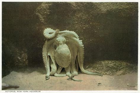 New York City, New York - Octopus at the Aquarium Art Print