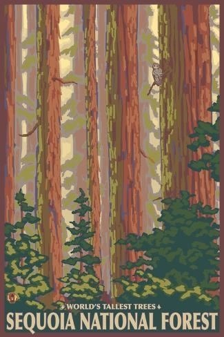 Sequoia National Forest, CA Redwood Trees Art Print