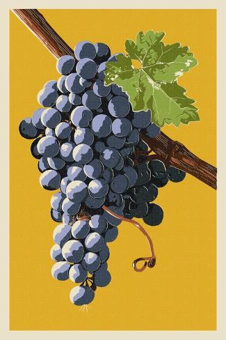 Wine Grapes Taidevedos