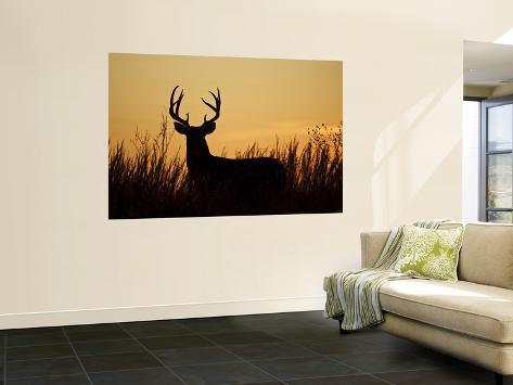 White-Tailed Deer in Grassland, Texas, USA Wall Mural