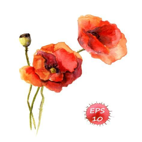 Poppy Flower. Watercolor Vector. Vintage Botanical Illustration Stampa artistica