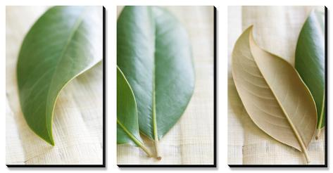 Leaves and Muslin Triptych Canvas Art Set