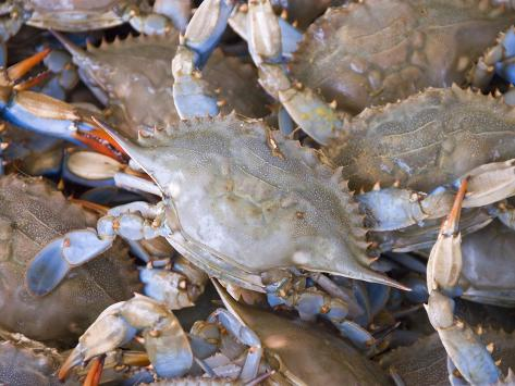 Blue Crabs, Maine Avenue Fish Market, Washington DC, USA, District of Columbia Photographic Print