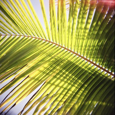 Green Palm Leaves, Jambiani, Zanzibar, Tanzania, East Africa Photographic Print