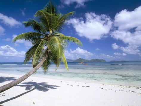 leaning palm tree and beach anse severe island of la digue