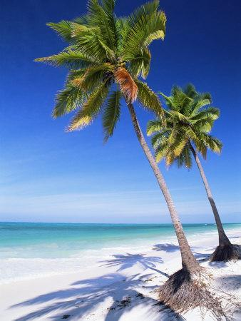 Palm Tree, White Sandy Beach and Indian Ocean, Jambiani
