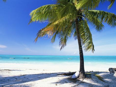 Palm Tree, White Sandy Beach and Indian Ocean, Jambiani, Island of Zanzibar, Tanzania, East Africa Photographic Print