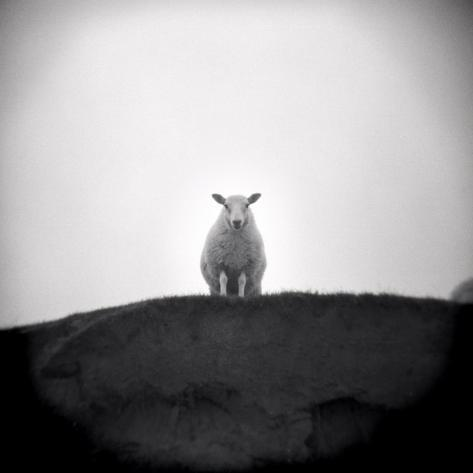 Sheep Standing on Hill Looking Down, Taransay, Outer Hebrides, Scotland, UK Photographic Print