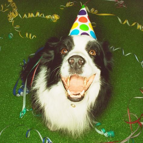 Dog Wearing Party Hat Photographic Print