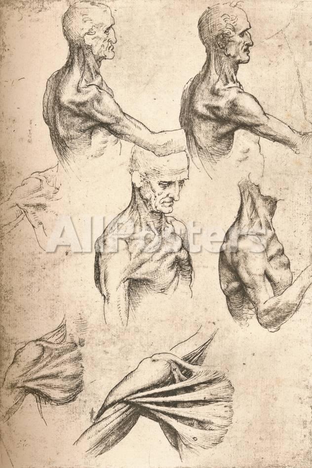 Anatomical Drawing, C1472-C1519 (1883) Giclee Print by Leonardo da ...