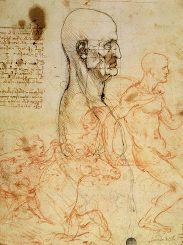 Anatomical Studies, circa 1500-07 Giclee Print