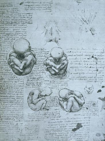 Five Views of a Foetus in the Womb, Facsimile Copy Giclee Print