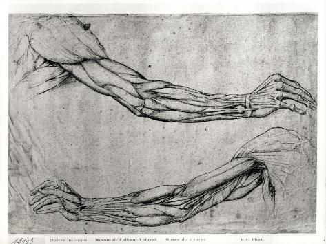 Study of Arms Giclee Print