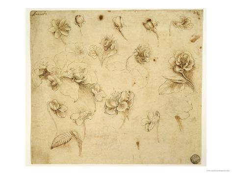 Study of Flowers Giclee Print