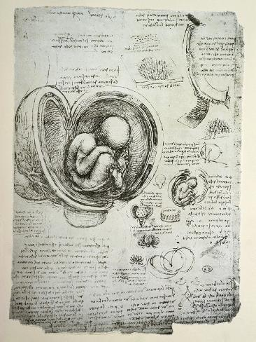 The Human Foetus in the Womb, Facsimile Copy Giclee Print