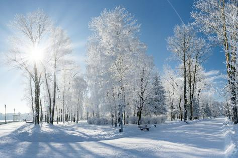 Image result for winter landscape