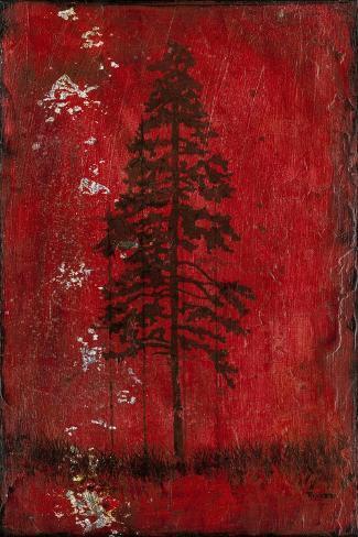 Lodge Pole Pine Stampa giclée