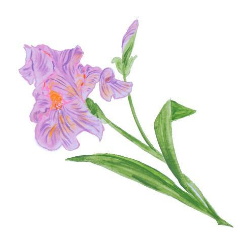 Floral VI Stampa artistica