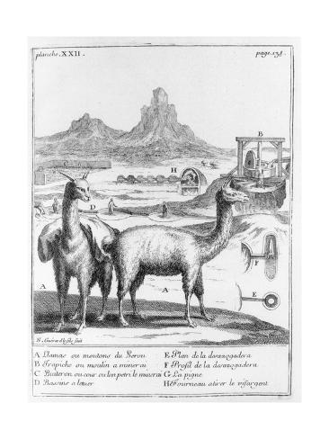 Llamas and Diagrams Concerning Mineral Extraction, from 'Relation Du Voyage De La Mer Du Sud Aux… Stretched Canvas Print