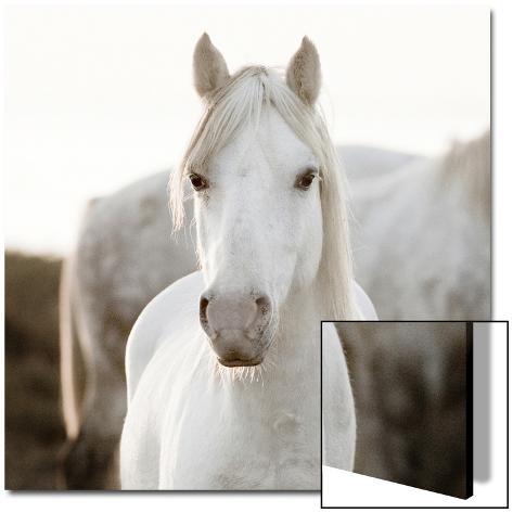 Horse Arte em acrílico