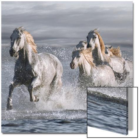 Horses Running at the Beach Arte em acrílico
