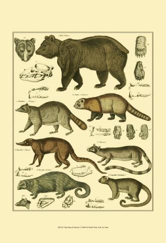 Oken Bear and Racoon Art Print