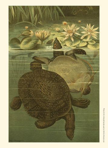 Pond Turtles Art Print