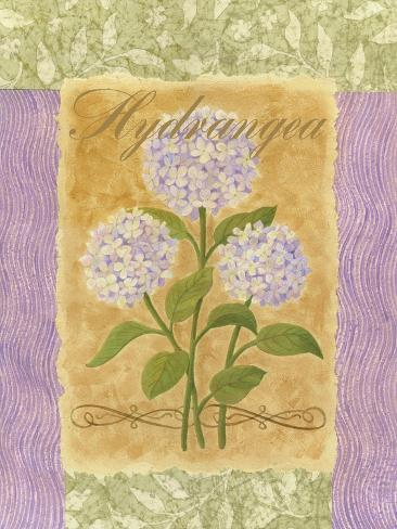 Sweet Hydrangea Art Print