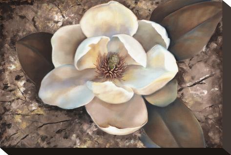 Magnolia II Stretched Canvas Print