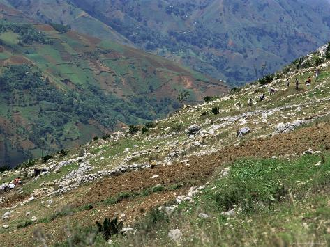 People Working in Steep Mountain Fields, at 2000M, Haiti, West Indies, Central America Photographic Print