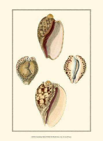 Cymbidum Shells Art Print