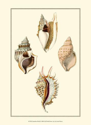 Strombus Shells Art Print