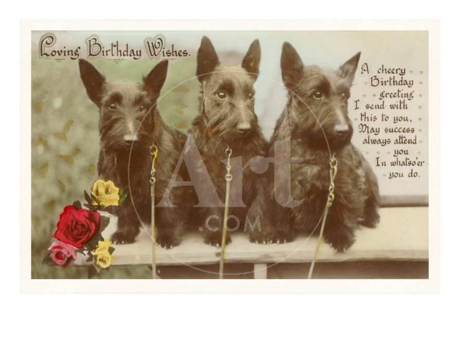 Loving Birthday Wishes Three Scottie Dogs Photo At AllPosters