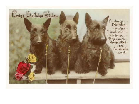 Loving Birthday Wishes Three Scottie Dogs