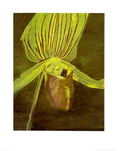 Orchid, c.1998 Art Print
