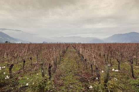 Santa Cruz Vineyard in Colchagua Valley Valokuvavedos