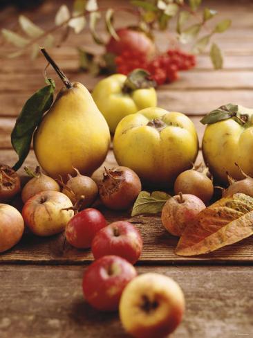 Autumn Fruits: Quinces, Medlars, Rowan Berries, Apples & Pears Stampa fotografica