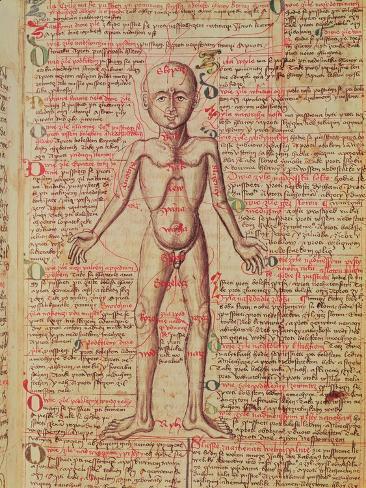 Anatomy of the Human Body, from 'Tractatus De Pestilencia' Giclee Print