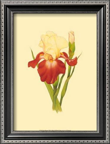 iris bloom viii prints by m prajapati. Black Bedroom Furniture Sets. Home Design Ideas