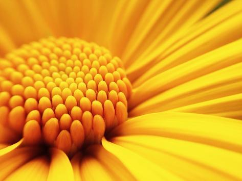 Macro Shot Yellow Flower Background Stampa fotografica