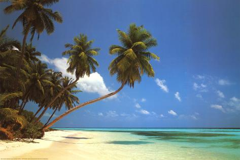 Maldive Morning (Palm Tree Beach) Art Poster Print Poster